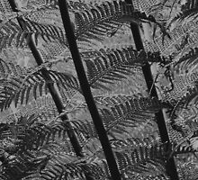 Bracken leaves by redown