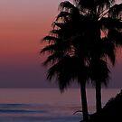Laguna Beach Palm Tree Silhouette by Eddie Yerkish