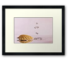 Sea Shell with Bubbles Framed Print