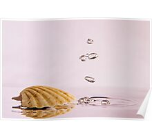 Sea Shell with Bubbles Poster