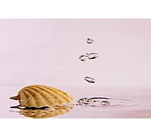 Sea Shell with Bubbles Photographic Print