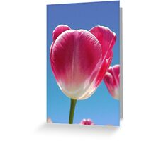 Flowers  - Tulips Greeting Card