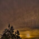 Altostratus sunrise with trees by Trevor Harley