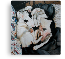 Cuddling up Canvas Print
