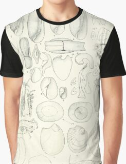 Manual of the New Zealand Mollusca by Henry Sutter 1915 0101 Akera tumida Pleurobranchus Tethys Graphic T-Shirt