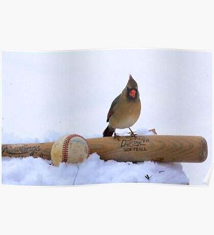 Female Cardinal on Baseball Bat Poster