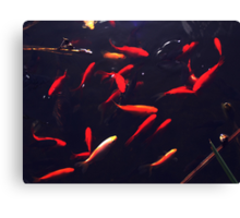 Cold Water Fish Canvas Print