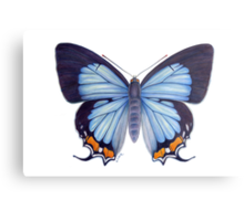 Imperial Blue Butterfly Metal Print
