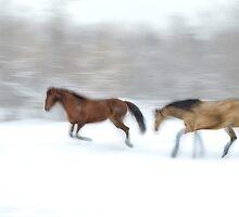 Horse Play by Daniel  Parent