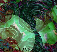 underwater rose by rosalie photography
