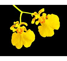 Twin Orchid Blooms Photographic Print