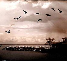 Birds © by Dawn M. Becker