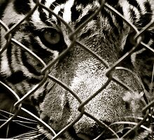 Caged Beauty  by ZWC Photography