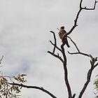 Australian Fauna by Cheryl Parkes