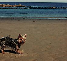 Beach Puppy!! by Ray King