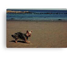 Beach Puppy!! Canvas Print