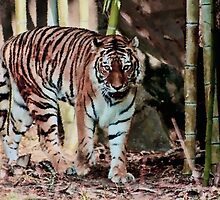 *Tiger on the Prowl* by DeeZ (D L Honeycutt)