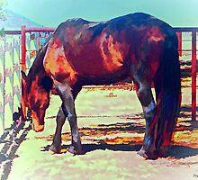 Corraled Horse by artstoreroom