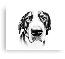 Swiss Mountain Dog Canvas Print