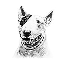 Comical Bull Terrier Photographic Print