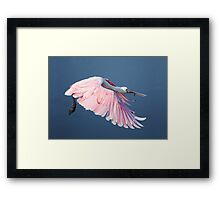 Roseate Spoonbill In Flight At Water's Surface Framed Print