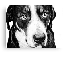 Guilty Swiss Mountain Dog Canvas Print