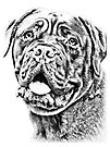 Dogue De Bordeaux by Marcia Rubin