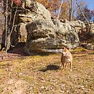 Shelby at Ship Rock by Thomas Young