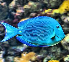 Blue is the New... by Melissa Carlini