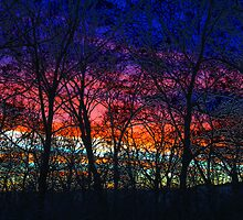 Winter Sunset by Mary Ann Reilly