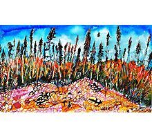 Northern Forest Photographic Print