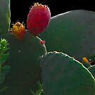 Cactus Study lll by heatherfriedman