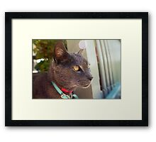 Handsome Misty Framed Print