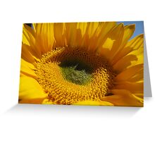 Sunflower -2 Greeting Card
