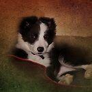 I'm a good girl I am............truly by hampshirelady