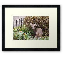 Deer Thief Photograph Framed Print