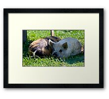 Top and Tail Framed Print