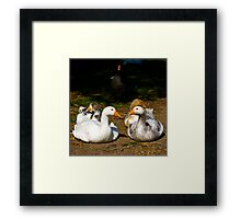 Gerty Goose and friends Framed Print