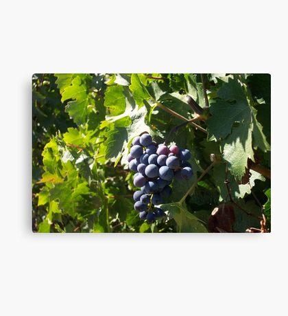 Napa Grapes Canvas Print