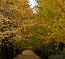 Ginkgo Canal  by Suhas  Shinde