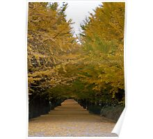 Ginkgo Canal  Poster