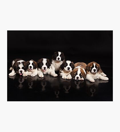 Seven Puppies Photographic Print