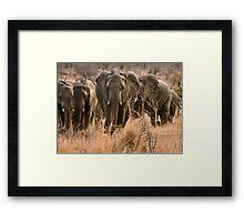 """For the love of elephants"" - African elephant (Loxodonta africana) Framed Print"