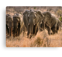 """For the love of elephants"" - African elephant (Loxodonta africana) Canvas Print"