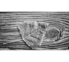 Leaf on Wood, black and white Photographic Print