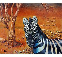 Berny The Zebra Photographic Print