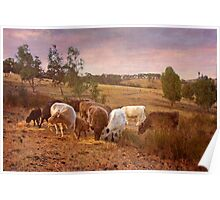 Grazing Kanmantoo, Adelaide Hills SA Poster
