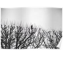 bird in a tree, Paris Poster