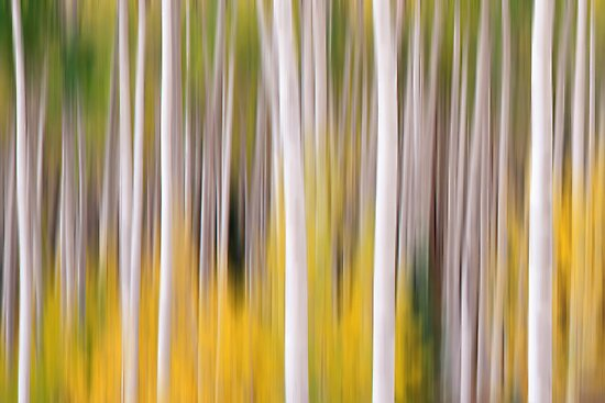 Abstract Aspens by Wojciech Dabrowski