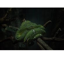 Tree Snake Photographic Print
